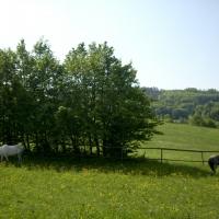 3bethenhof-reitstall3