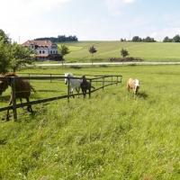 3bethenhof-reitstall33
